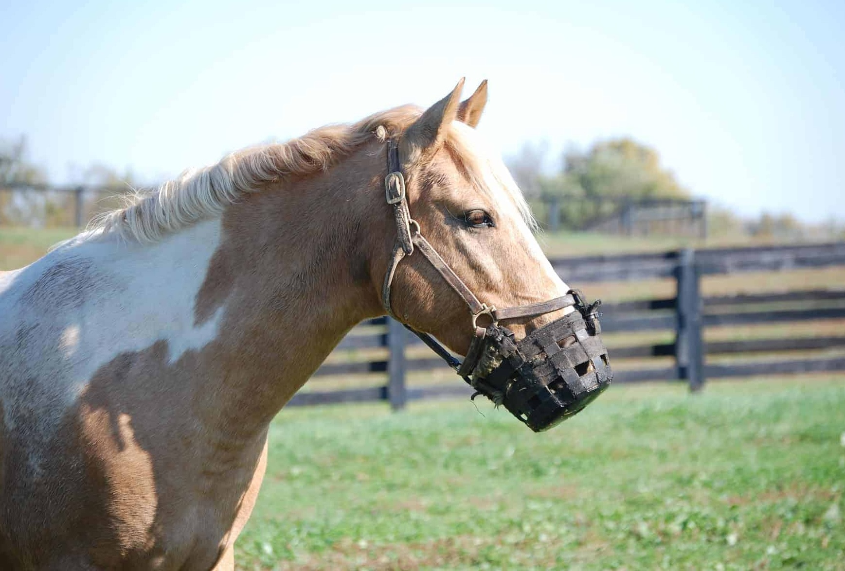 Grazing Muzzles for Horses